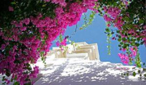 pink-bougainvilleam